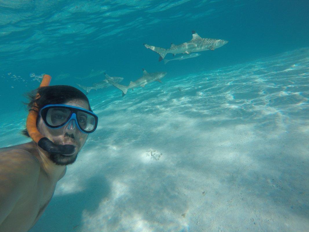 Auf der Pazifikinsel Moorea kann man genusslich mit Hai spielen!
